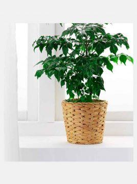 ikea model fridfull mat vases 1 268x358 - جای گلدان حصیری ایکیا مدل FRIDFULL