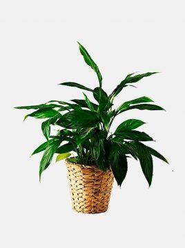 ikea-model-fridfull-mat-vases