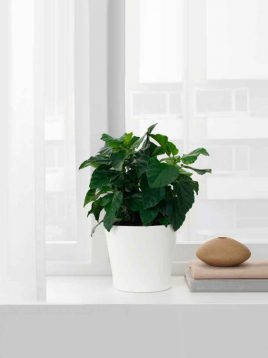 ikea-model-papaja-ceramic-vases