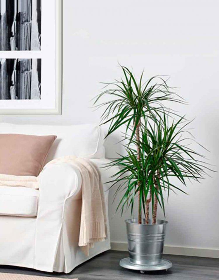 گلدان فلزی سوکر H24 ایکیا